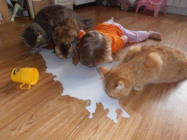 mléko.jpeg