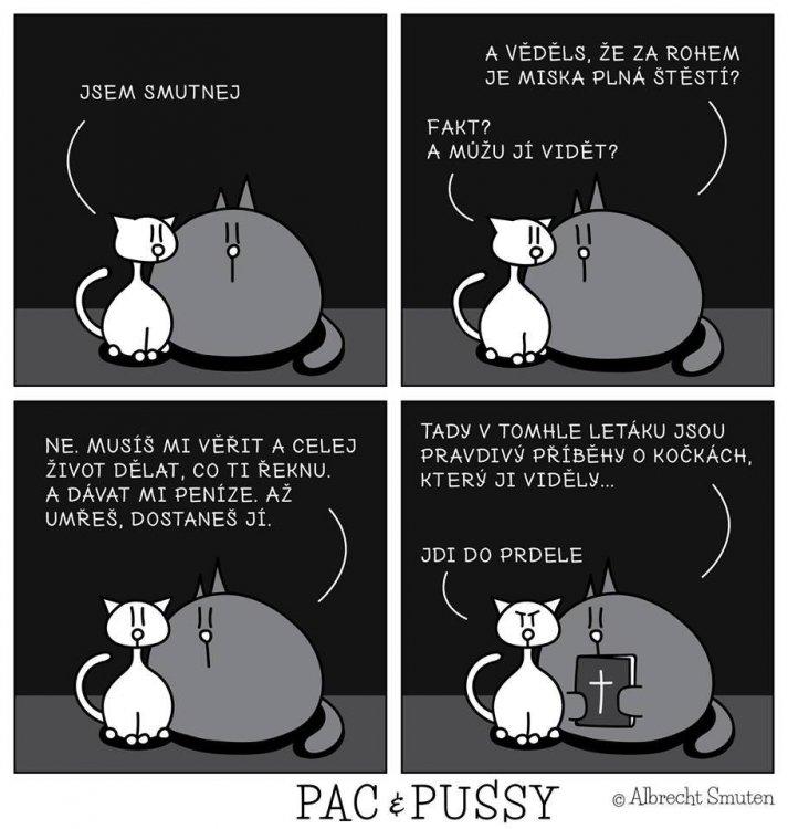 kočka.jpg