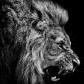 Lion de la France: zimne foto - poslední příspěvek od azuritko